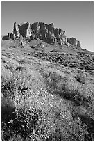 Brittlebush (Encelia farinosa) and craggy mountains, Lost Dutchman State Park, late afternoon. Arizona, USA ( black and white)