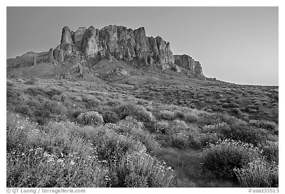Craggy Superstition Mountains and brittlebush, Lost Dutchman State Park, dusk. Arizona, USA (black and white)