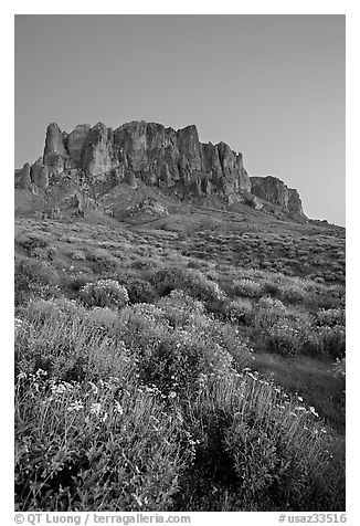 Superstition Mountains and brittlebush, Lost Dutchman State Park, dusk. Arizona, USA (black and white)