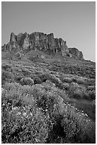Superstition Mountains and brittlebush, Lost Dutchman State Park, dusk. Arizona, USA ( black and white)