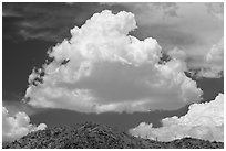 Cloud and ridge with saguaro cactus, Sonoran Desert National Monument. Arizona, USA (black and white)