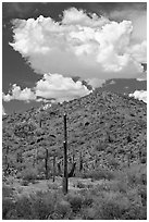 Saguaro cactus, hill, and clouds, Sonoran Desert National Monument. Arizona, USA ( black and white)