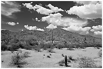 Desert landscape, Sonoran Desert National Monument. Arizona, USA ( black and white)