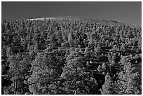 Pine trees on slopes of crater, Sunset Crater Volcano National Monument. Arizona, USA ( black and white)