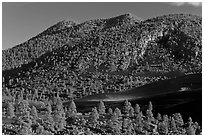 Cinder-covered slopes, Sunset Crater Volcano National Monument. Arizona, USA ( black and white)