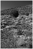 Volcanic hillside, Wupatki National Monument. Arizona, USA ( black and white)