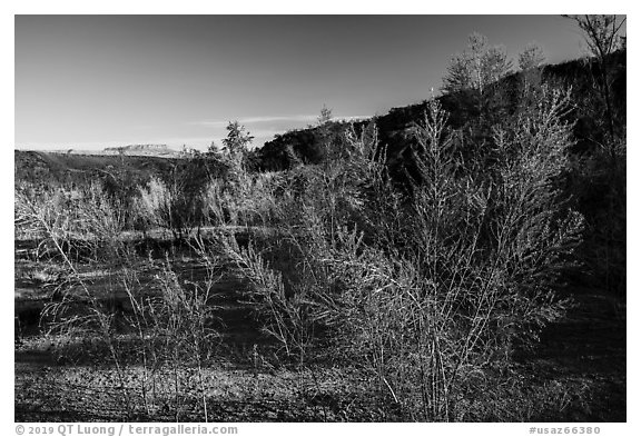 Pakoon Springs in the spring. Parashant National Monument, Arizona, USA (black and white)