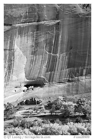Floor of canyon with cottonwoods in fall colors and White House ruins. Canyon de Chelly  National Monument, Arizona, USA (black and white)