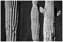 Cactus and wall, Old Tucson Studios. Tucson, Arizona, USA ( black and white)