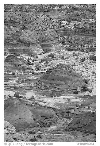 Sandstone mounds. Coyote Buttes, Vermilion cliffs National Monument, Arizona, USA (black and white)