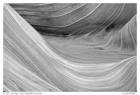Sandstone striations in the Wave. Coyote Buttes, Vermilion cliffs National Monument, Arizona, USA (black and white)