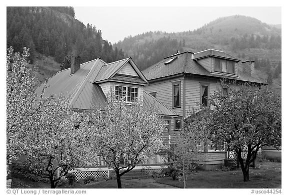 Flowering trees and houses. Telluride, Colorado, USA (black and white)