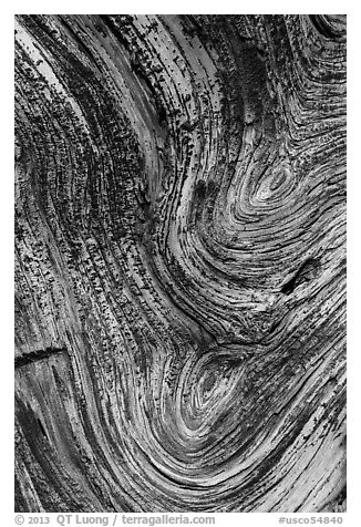 Juniper tree bark detail. Chimney Rock National Monument, Colorado, USA (black and white)
