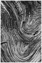 Juniper tree bark detail. Chimney Rock National Monument, Colorado, USA ( black and white)