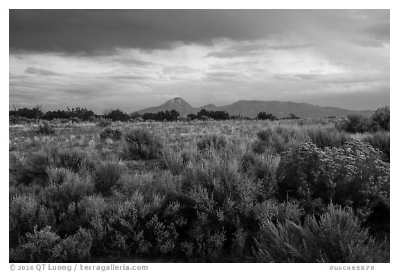 Shrubs on flats and Sleeping Ute Mountain, evening. Canyon of the Anciens National Monument, Colorado, USA (black and white)