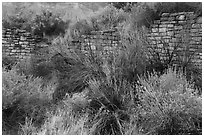 Shrubs and Lower House wall. Yucca House National Monument, Colorado, USA ( black and white)