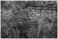 Shrubs and wall detail. Yucca House National Monument, Colorado, USA ( black and white)