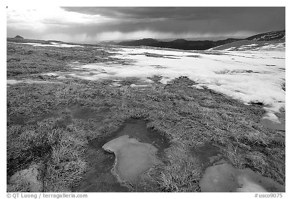 Tundra and snow on Mt Evans. Colorado, USA (black and white)
