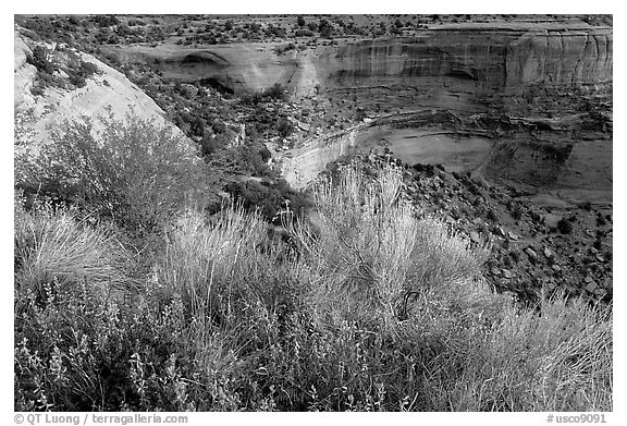Indian Paintbrush and sandstone cliffs. Colorado National Monument, Colorado, USA (black and white)