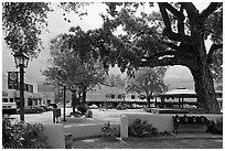 Plazza, trees and buildings in adobe style. Taos, New Mexico, USA ( black and white)