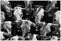 Cow skulls for sale. Santa Fe, New Mexico, USA ( black and white)