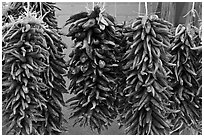Ristras for sale. Santa Fe, New Mexico, USA ( black and white)