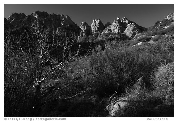 Needles rising above vegetation. Organ Mountains Desert Peaks National Monument, New Mexico, USA (black and white)
