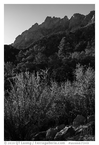 Forested slopes below Organ Needles. Organ Mountains Desert Peaks National Monument, New Mexico, USA (black and white)