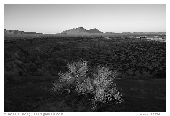 Shrub and Kilbourne Hole, early morning. Organ Mountains Desert Peaks National Monument, New Mexico, USA (black and white)