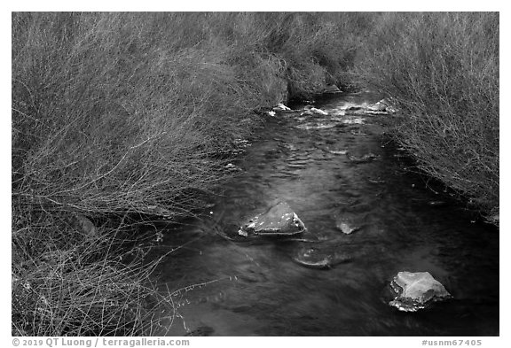Stream and willows. Rio Grande Del Norte National Monument, New Mexico, USA (black and white)