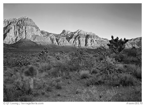 Yuccas and rock walls at sunrise, Red Rock Canyon. Red Rock Canyon, Nevada, USA (black and white)