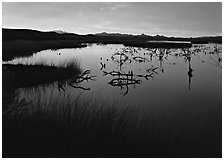 Wetlands at sunrise, Havasu National Wildlife Refuge. Nevada, USA (black and white)