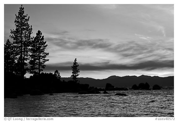 Shoreline with pine trees and rocks, Sand Harbor, East Shore, Lake Tahoe, Nevada. USA (black and white)