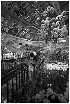 Botanical garden and conservatory with purple light, Bellagio Casino. Las Vegas, Nevada, USA (black and white)