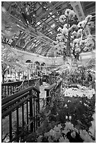Botanical garden and conservatory with green light, Bellagio Casino. Las Vegas, Nevada, USA (black and white)