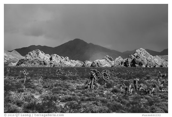 Joshua Trees, Whitney Pocket with rainbow. Gold Butte National Monument, Nevada, USA (black and white)