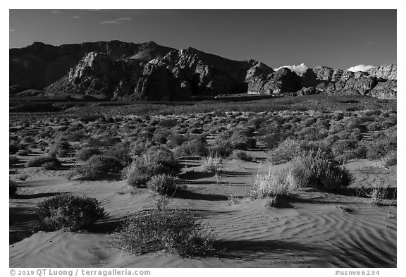 Sand dunes. Gold Butte National Monument, Nevada, USA (black and white)