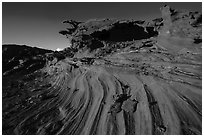 Swirl, Little Finland. Gold Butte National Monument, Nevada, USA ( black and white)