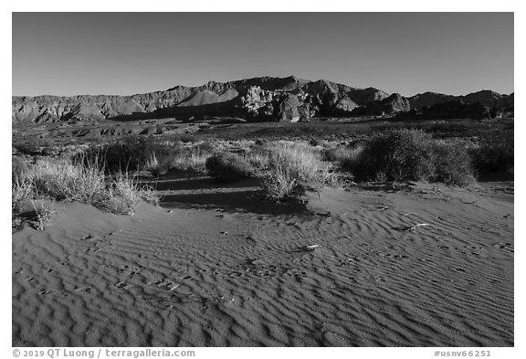Dunes with animal tracks in sand. Gold Butte National Monument, Nevada, USA (black and white)
