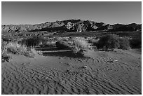 Dunes with animal tracks in sand. Gold Butte National Monument, Nevada, USA ( black and white)
