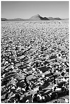 Playa with peeling dried mud, early morning, Black Rock Desert. Nevada, USA (black and white)
