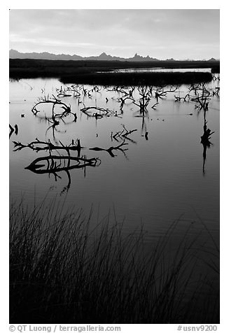Marsh at sunrise, Havasu National Wildlife Refuge. Nevada, USA (black and white)