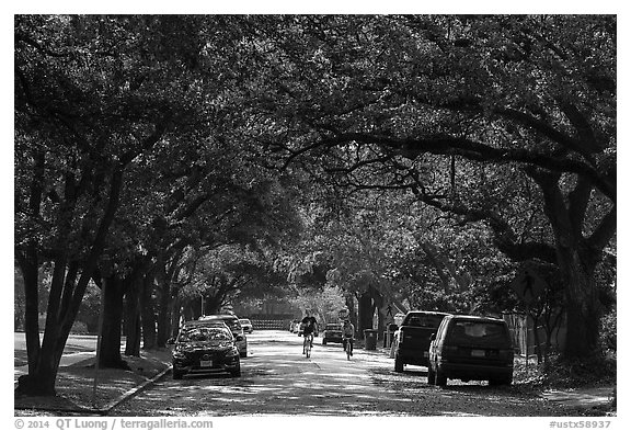 Tree-line street, Museum District. Houston, Texas, USA (black and white)