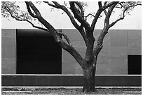 Tree and wall, Museum of Fine Arts. Houston, Texas, USA ( black and white)