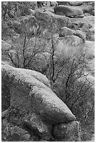 Boulders and shurbs, Enchanted Rock state park. Texas, USA ( black and white)