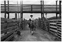 Man riding horse in path between fences. Fort Worth, Texas, USA ( black and white)