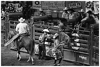 Gates, Stokyards Rodeo. Fort Worth, Texas, USA ( black and white)
