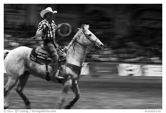 Rodeo contestant riding horse. Fort Worth, Texas, USA (black and white)