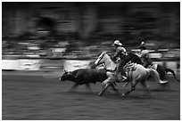 Team roping, Stokyards Championship Rodeo. Fort Worth, Texas, USA ( black and white)