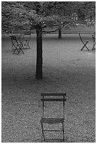 Chairs and trees in courtyard of Dallas Museum of Art. Dallas, Texas, USA ( black and white)